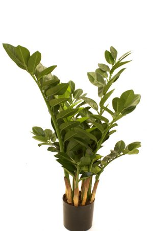 Garderobs-blomma, konstgjord grön växt -0