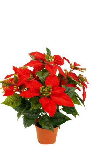 julstjärna, röd-0