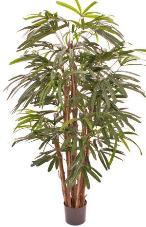 Raphis palm, konstgjord-0