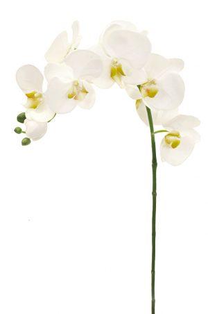 orkidé snitt, vit-0