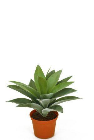 Agave, konstgjord krukväxt-0