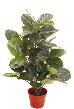 Artocarpus, konstgjord krukväxt-0