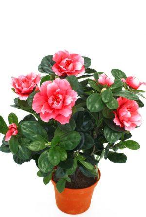 Azalea, rosa, konstgjord blomma-0