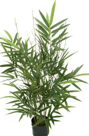 Bambu, konstgjord krukväxt-0