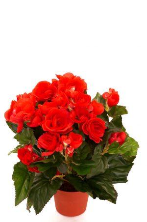 Begonia, röd, konstgjord blomma-0