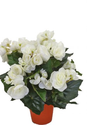 Begonia, vit, konstgjord blomma-0