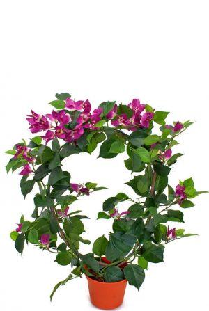 Bougainvillea, lila, konstgjord-0