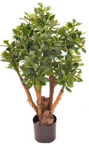Crassula, konstgjord krukväxt, träd-0