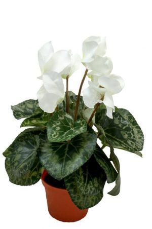 Cyklamen, vit, konstgjord blomma-0