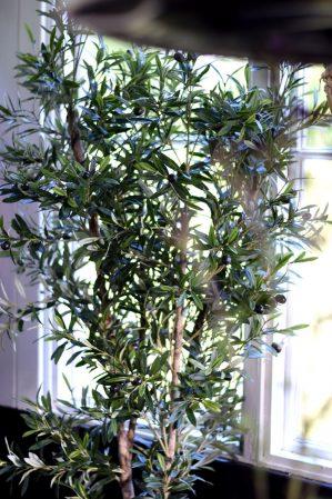 Olivträd, konstgjort-5921