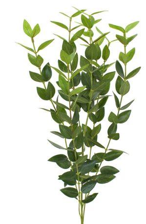 Eucalyptus, konstgjord kvist-0