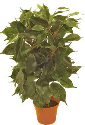 Ficus, konstgjord krukväxt-0