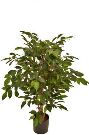 Ficus, konstgjort träd-0