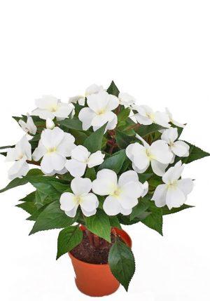 Flitiga Lisa, vit, konstgjord krukväxt sommar-0