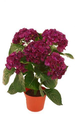 Hortensia, röd lila, konstgjord krukväxt-0
