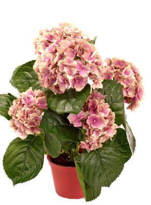 Hortensia, rost lila, konstgjord krukväxt-0