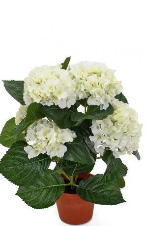 Hortensia, vit, konstgjord krukväxt-0