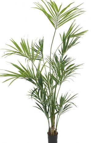 Kentia palm, konstgjord-0