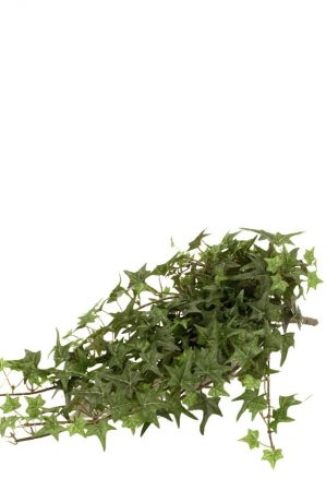 Murgröna, flikig, konstgjord-0