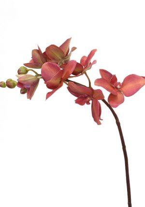 Orkidéstängel, vinröd, konstgjord-0