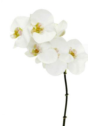 Orkidéstängel, vit, konstgjord -0