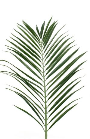 Palmblad, konstgjort -0
