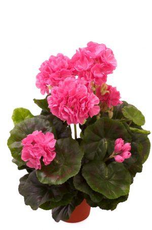 Pelargonia, ljus lila, konstgjord blomma-0