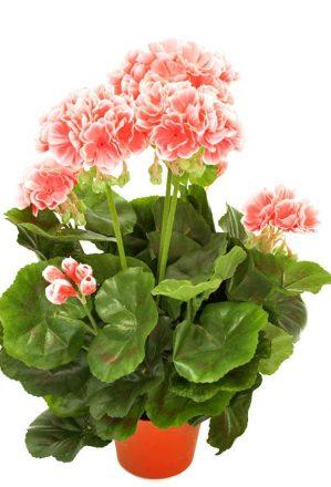 Pelargonia, rosa, konstgjord-blomma-0
