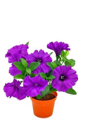 Petunia, blå, konstgjord blomma-0