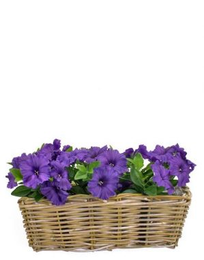 Petunia, blå, konstgjord blomma-5282