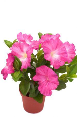 Petunia, cerise, konstgjord blomma-0