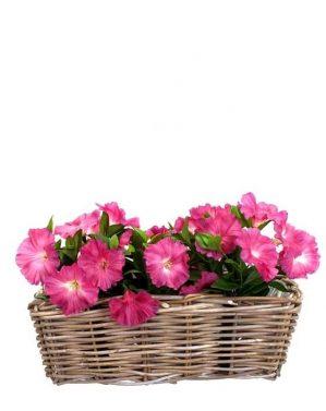 Petunia, cerise, konstgjord blomma-5277
