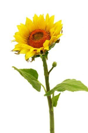 Solros, konstgjord blomma-0