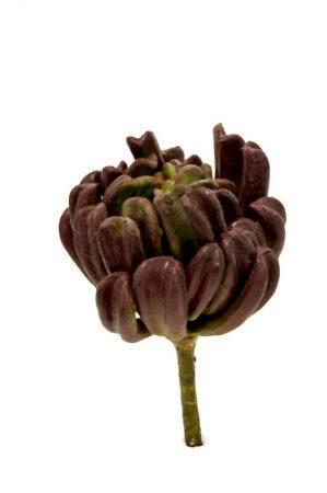Succulent röd brun, konstgjord-0