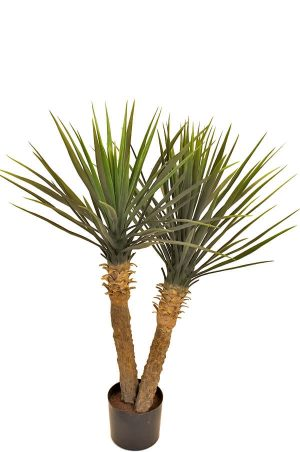 Yucca rostrata, konstgjord-0