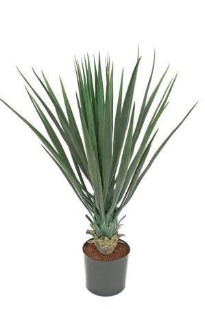 Yucca rostrata, konstgjord -0