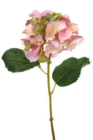 hortensia, lime/rosa-0