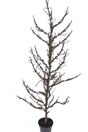 Träd, konstgjort-0