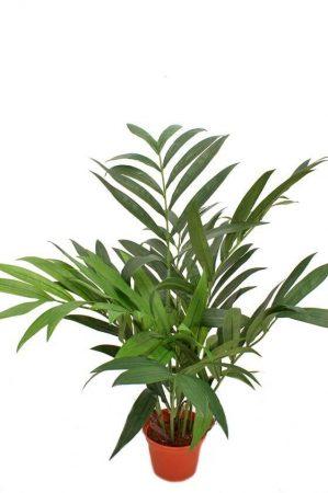 Palm, konstgjord krukväxt-0
