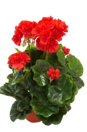 Pelargonia, röd, konstgjord blomma-0