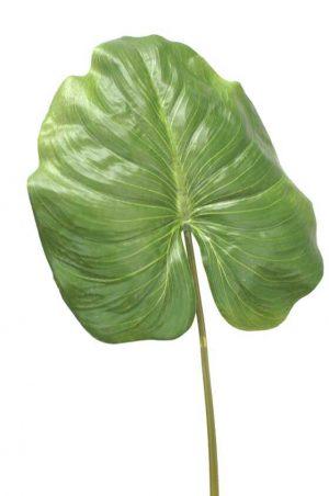 Blad, konstgjord växt, blomma-0