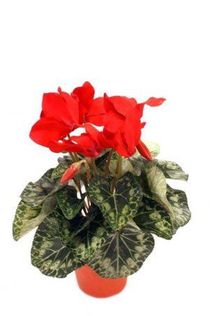 Cyklamen, röd, konstgjord blomma-0