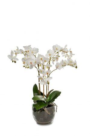 Orkidé i glaskruka, konstgjord-0