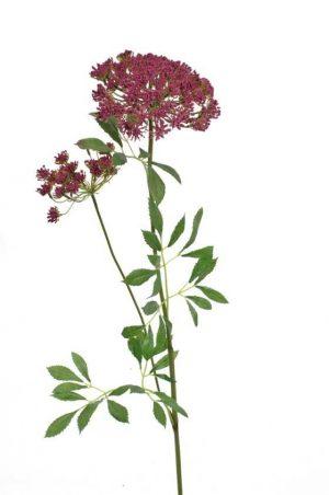 Trachelium, vinröd, konstgjord blomma-0