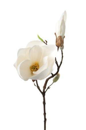 Magnolia, vit, konstgjord blomma-0