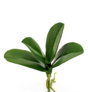 Orkidéblad, konstgjort-0