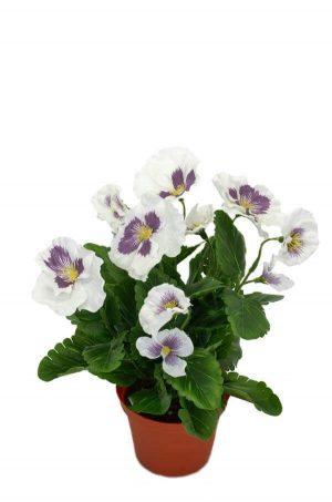 Pensé i kruka, vit, konstgjord blomma-0