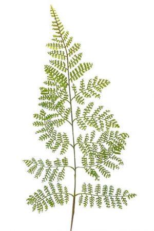 Ormbunksblad, grön, konstgjord-0
