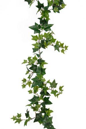 murgröna, grön-0
