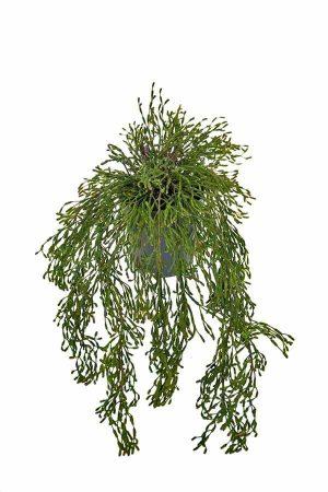Rhipsalis, häng, konstgjord-0